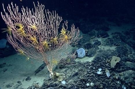 Une réserve naturelle marine dans l'Atlantique | Biodiversité & Relations Homme - Nature - Environnement : Un Scoop.it du Muséum de Toulouse | Scoop.it