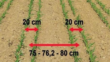 Semis de maïs en quinconce - Que faut-il penser de cette technique ? | Agriculture de Précision | Scoop.it