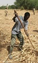 Les contradictions du programme d'Agra de soutien à l'agriculture | Questions de développement ... | Scoop.it