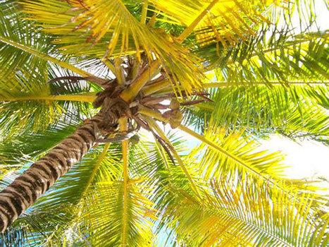 Bayahibe, Repubblica Dominicana - Immersioni a ... - Scubaportal | Immersioni sub in Italia | Scoop.it