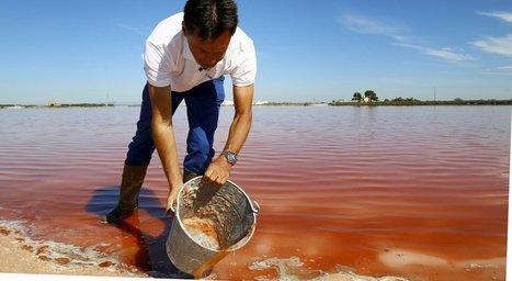 Camargue : l'or rose des Salins | Chronique d'un pays où il ne se passe rien... ou presque ! | Scoop.it