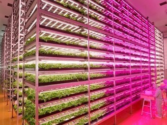 This former semiconductor factory is now the world's largest indoor farm, producing 10K heads of lettuce per day | leapmind | Scoop.it