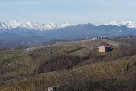 North Piedmont Saves the Best Wine for Last | Vitabella Wine Daily Gossip | Scoop.it