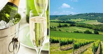 La Champagne crée la première coiffe intelligente pour lutter contre la fraude. | Verres de Contact | Scoop.it