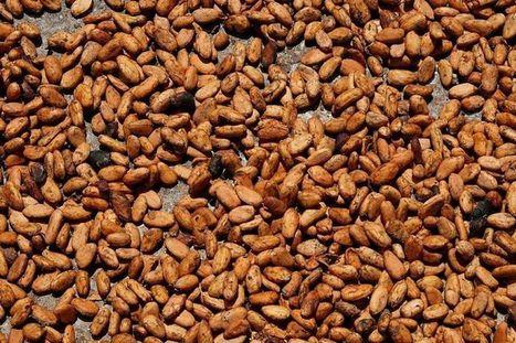 L'industrie agroalimentaire aurait un intérêt à soutenir les petits producteurs | Questions de développement ... | Scoop.it