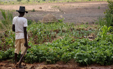 Climate Change Threatens Southern Africa's Vital Crops   Climate Central   Food issues   Scoop.it