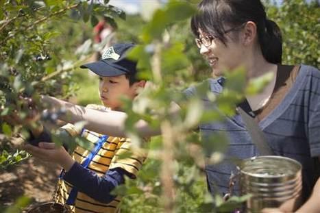 [Eng] Pour des familles de Fukushima , un bref répit du cauchemar nucléaire   msnbc.com   Japon : séisme, tsunami & conséquences   Scoop.it