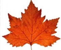 Autumn lesson plans and activities | Homework Helpers | Scoop.it