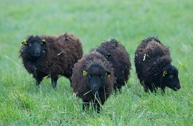 Secrets of Black Sheep Marketing - Forbes | Criatividade e Marketing | Scoop.it
