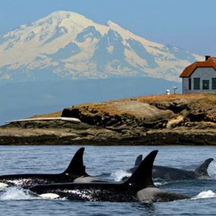 Travel and Adventurous Whale Watching Trip: Spending A Vacation In San Juan Islands | Lopez Island | Scoop.it