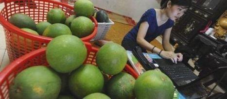 Au Vietnam, les entrepreneurs cherchent fortune en ligne   Toxique, soyons vigilant !   Scoop.it