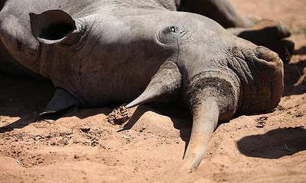 Kruger: Police crack down on rhino poachers | What's Happening to Africa's Rhino? | Scoop.it