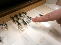 Close-Up Photos of Ants Show Species Diversity | All About Ants | Scoop.it
