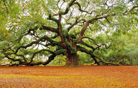 Salomé Gonzalez . . . | Les arbres | Scoop.it