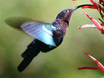 #Hummingbird - A New Google Search #Algorithm | e-Xploration | Scoop.it