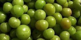 Triphala, l'erba millenariache promuove... - L'Energia delle Piante: Benessere secondo Natura   L'Energia delle Piante salute e benessere secondo natura   Scoop.it