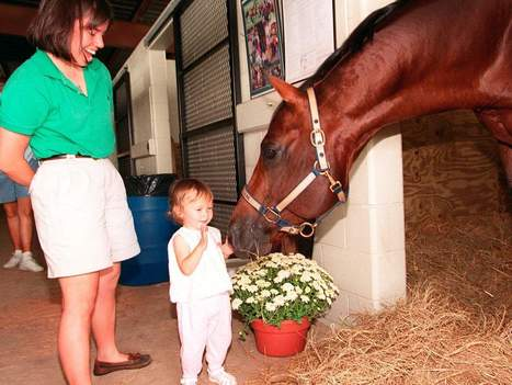 Quarter horse clones could be allowed into AQHA registry   Horse and Rider Awareness   Scoop.it