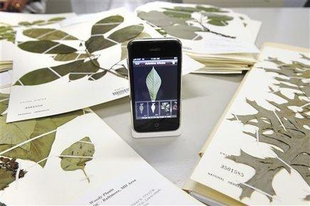 LeafSnap, per scoprire le foglie in un'app...   Progettazione e manutenzione giardini   Scoop.it