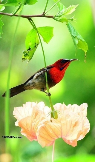 Beauty Of Bird Fabulous | Funny Pic And Wallpapers | Scoop.it
