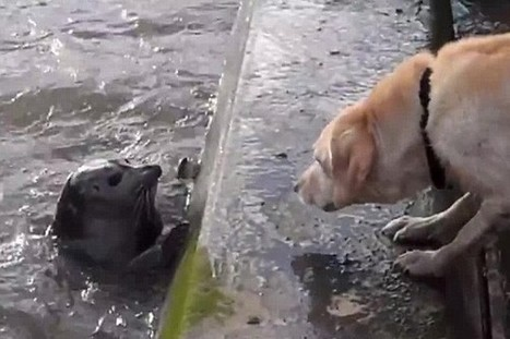 Video: seal jumps out of the Thames to play with dog - AOL Travel UK | Cute Dogs | Scoop.it