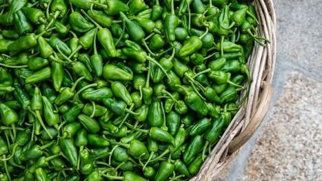 Padrón Peppers - Our Spanish Food Blog - Brindisa Spanish Foods | Travel Northern Spain | Scoop.it