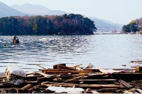 Charente-Maritime : sauver l'huître japonaise | SudOuest.fr | Japon : séisme, tsunami & conséquences | Scoop.it