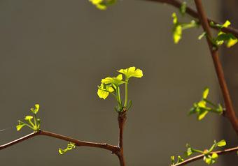 Sunburned San Pedro cactus (Trichocereus pachanoi) | The Lophophora Blog | Scoop.it