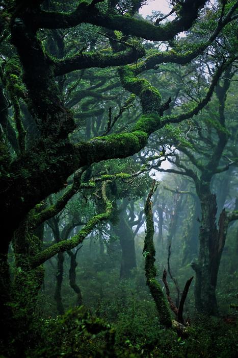 Astonishing New Zealand Landscape Photography via abduzeedo.com @ Weeder | Everything Photographic | Scoop.it