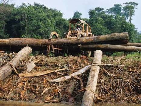 More environmental activists are being killed than ever before   éducation au développement   Scoop.it