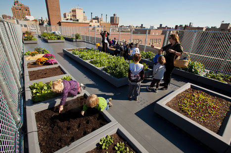 Schools Add In-House Farms as Teaching Tools in New York City | School Gardening Resources | Scoop.it