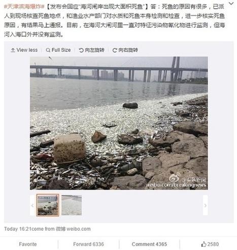 En images: après la catastrophe, des milliers de poissons morts à Tianjin   Ca m'interpelle...   Scoop.it