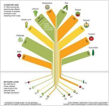 Kokopelli condamnée: biodiversité, la fin des illusions - eco-SAPIENS | manager le bon manger | Scoop.it