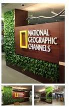 National Geographic Channel Headquarters Unveils New Living Green Wall Lobby | The Roof Blog | Sustainable living and business practices | Scoop.it