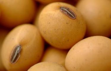 Soybean prices well supported | Food Markets | Scoop.it