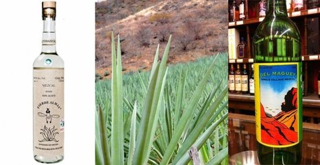 Know The 5 Types Of Mezcal | Hecho en México | Scoop.it