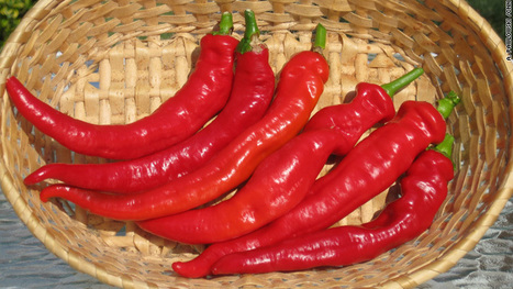 "Hooked on cowhorn peppers (and possibly ""happy hormones"") 