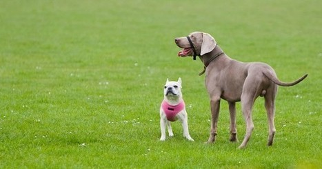 What is selective breeding? | Caring About Pets | Scoop.it