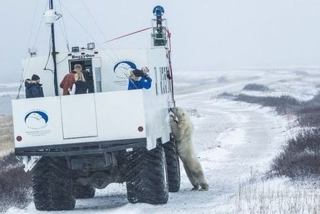 Polar bears on Google Maps! Street View comes to the Arctic - Fox News | visual mapping | Scoop.it