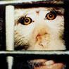 אתיקה של ניסויים בבעלי-חיים | ethics in animal experiments | Scoop.it