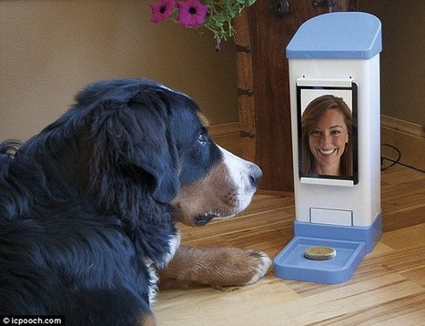 Device that lets dog owners video call their companions for a 'chat' | Morning Radio Show Prep | Scoop.it
