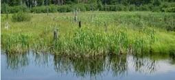 Le marais de Laterrière : quels défis pour sa mise en valeur ?   La gestion de l'eau dans le monde : les conflits coulent à flots !   Scoop.it