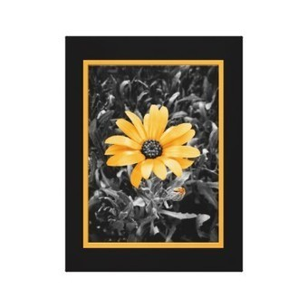 Desaturated Spring Flash African Daisy Over Black Canvas Prints from Zazzle.com | Z Photography | Scoop.it