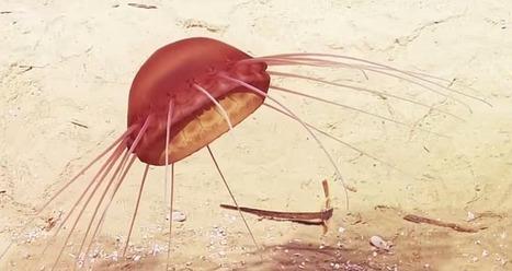 14 Weirdest Animals Recorded by E/V Nautilus | Strange Animals | Strange animals | Scoop.it