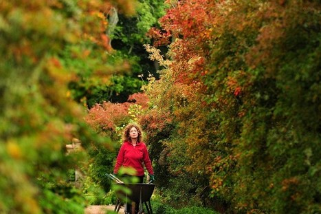 Autumn colours around Britain - Telegraph | The Miracle of Fall | Scoop.it