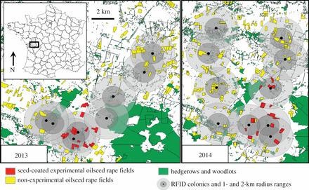 Néonicotinoïdes et abeilles: la désorientation des individus confirmée en plein champ, la colonie adapte sa stratégie | EntomoNews | Scoop.it