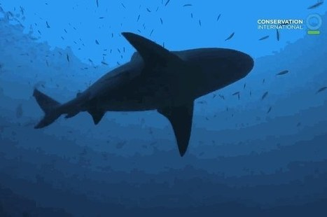 5 Reasons You Need Sharks | All about water, the oceans, environmental issues | Scoop.it