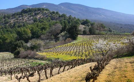 Interview : le Clos des Cimes s'ouvre à l'oenotourisme   Tourisme viticole en France   Scoop.it