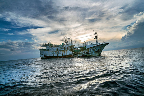 Palau vs. the Poachers | Thinking Outside the Box | Scoop.it