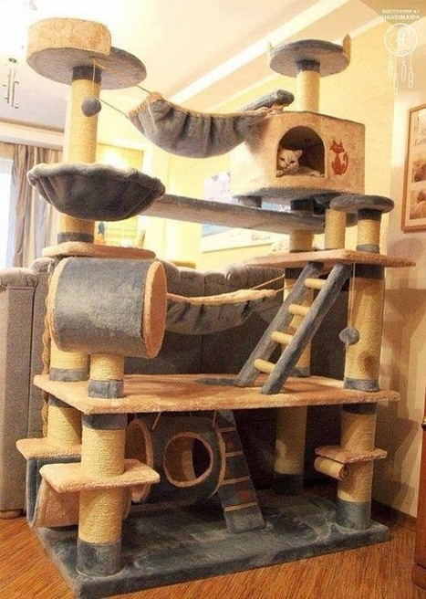 Cool Cat Tree Plans Don't Work | Pets And Animals | Scoop.it