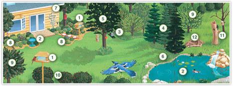 Birdscaping Your Backyard   Gardening Galore   Scoop.it